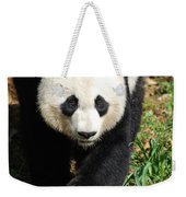 Gorgeous Sweet Giant Panda Bear Ambling Along Weekender Tote Bag