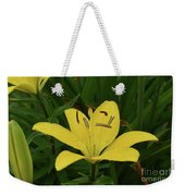Gorgeous Yellow Lily Growing In Nature Up Close Weekender Tote Bag