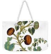 Gourd, 1735 Weekender Tote Bag