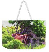Grand Turk Donkeys In The Shade Weekender Tote Bag
