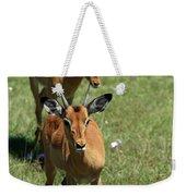 Grassland Deer Weekender Tote Bag