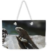 Gray Iguana With Spines Along His Back On A Rock Weekender Tote Bag