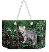 gray Wolf Pup in Woods Weekender Tote Bag