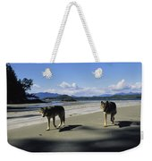 Gray Wolves On Beach Weekender Tote Bag