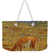 Grazing Guanaco In Patagonia Weekender Tote Bag