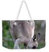Grazing Kangaroo Weekender Tote Bag