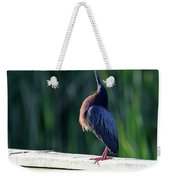 Green Heron Calling Softly In The Early Morning Weekender Tote Bag