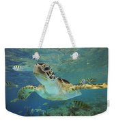 Green Sea Turtle Chelonia Mydas Weekender Tote Bag