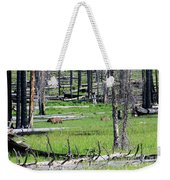 Grizzly Bear And Cub Cross An Area Of Regenerating Forest Fire Weekender Tote Bag
