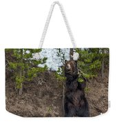 Grizzly Shaking A Tree Weekender Tote Bag