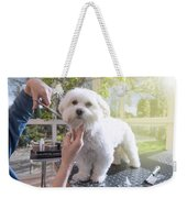 Grooming The Neck Of Adorable White Dog Weekender Tote Bag