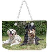 Group Of Three Dogs Weekender Tote Bag