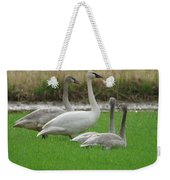 Group Of Young Swans Weekender Tote Bag