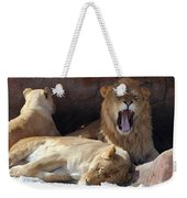Growling Male Lion In Den With Two Females Weekender Tote Bag