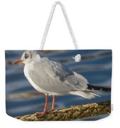 Gull On A Rope Weekender Tote Bag