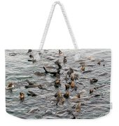 Happy Sea Lions In Santa Cruz Weekender Tote Bag
