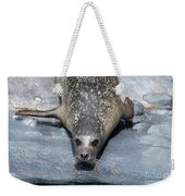 Harbor Seal Ready To Plunge Into The Water Weekender Tote Bag
