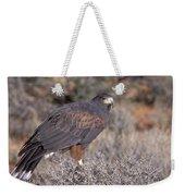 Harris Hawk At Rest Weekender Tote Bag