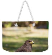 Harris Hawk Looking At Infinity Weekender Tote Bag