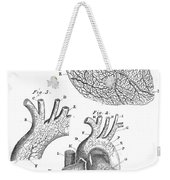 Heart Anatomy, Illustration, 1703 Weekender Tote Bag