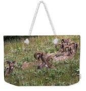 Herd Of Bighorn Sheep Weekender Tote Bag