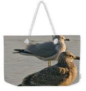 Herring Gull  Weekender Tote Bag