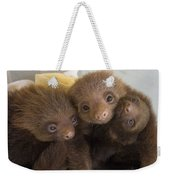 Hoffmanns Two-toed Sloth Choloepus Weekender Tote Bag