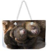 Hoffmanns Two-toed Sloth Orphans Hugging Weekender Tote Bag by Suzi Eszterhas