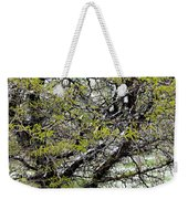 Honey Locust Tree On A Spring Snow Day Weekender Tote Bag