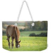 Horse In Field Near Ballyvaloo, Blackwater, Wexford Weekender Tote Bag
