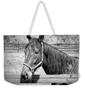 Horse Portrait In Black And White Weekender Tote Bag