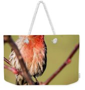 House Finch In Full Color Weekender Tote Bag