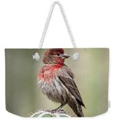 House Finch Perched On Cactus  Weekender Tote Bag