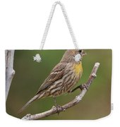 House Finch With Yellow Breast 1  Weekender Tote Bag