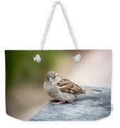 House Sparrow Weekender Tote Bag by Scott Lyons