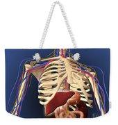 Human Skeleton Showing Digestive System Weekender Tote Bag
