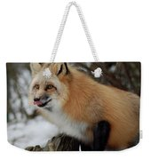 Hungry Fox Weekender Tote Bag