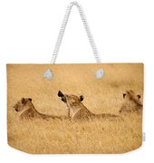Hungry Lions Weekender Tote Bag