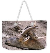 Ibex Mother And Son Weekender Tote Bag