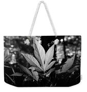 Illuminated Leaf, Black And White Weekender Tote Bag
