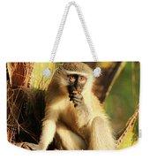 Illuminated Vervet Monkey  Weekender Tote Bag
