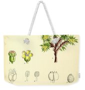 Illustrations Of The Flowering Plants And Ferns Of The Falkland Weekender Tote Bag