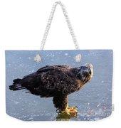 Immature Eagle Having Lunch Weekender Tote Bag