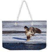 Immature Eagle On Ice Weekender Tote Bag