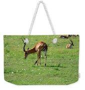 Impala Buck Weekender Tote Bag