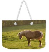 In The Light Of The Evening Sun Weekender Tote Bag