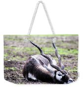 Indian Antelope Weekender Tote Bag