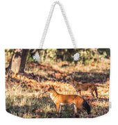 Indian Wild Dogs Dholes Kanha National Park India Weekender Tote Bag
