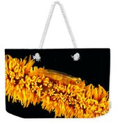 Indonesia, Goby Weekender Tote Bag