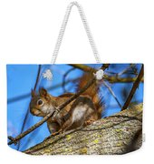 Inquisitive Squirrel Weekender Tote Bag